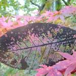 木の葉の物語